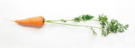 Ένα ώριμο φρέσκο καρότο που απομονώνεται στο άσπρο υπόβαθρο Στοκ Φωτογραφίες