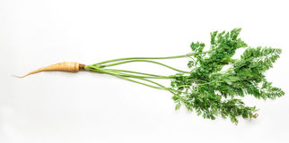 Ένα ώριμο φρέσκο καρότο που απομονώνεται στο άσπρο υπόβαθρο Στοκ φωτογραφία με δικαίωμα ελεύθερης χρήσης