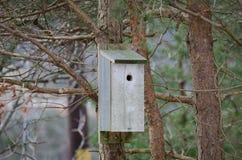 Ένα birdhouse στο δέντρο Στοκ Εικόνα
