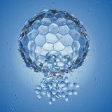 Ένα blastocyst διανυσματική απεικόνιση