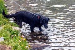 Ένα dog& x27 προοπτική του s Στοκ Εικόνες