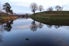 Ένα durk που κολυμπά σε μια μπλε σαφή ήρεμη έλλειψη στην Κοπεγχάγη danmark στοκ εικόνες