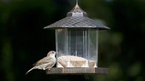 Ένα finch σπιτιών πουλί σε έναν τροφοδότη στοκ εικόνες με δικαίωμα ελεύθερης χρήσης