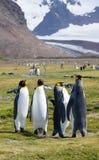 Ένα Foursome του βασιλιά Penguins σε έναν χλοώδη τομέα με τα χιονώδη βουνά πίσω Στοκ εικόνες με δικαίωμα ελεύθερης χρήσης