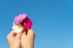 Ένα freshy λουλούδι στον ουρανό στοκ εικόνα με δικαίωμα ελεύθερης χρήσης