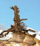 Βράχος και χιόνι δέντρων Στοκ Φωτογραφίες