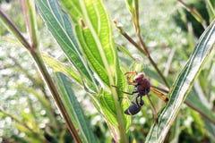 Ένα hornet Στοκ Εικόνα