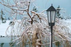 Ένα lamppost πίσω από μια χιονισμένη ιτιά Στοκ Φωτογραφία