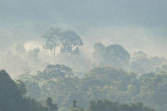 Ένα misty δάσος στα ξημερώματα Στοκ Φωτογραφία