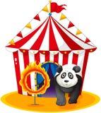 Ένα panda εκτός από τη βολίδα διανυσματική απεικόνιση