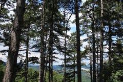 Ένα pine-wood δάσος Στοκ Φωτογραφίες
