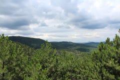 Ένα pine-wood δάσος Στοκ Εικόνες