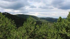 Ένα pine-wood δάσος Στοκ Εικόνα