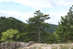 Ένα pine-wood δάσος Στοκ φωτογραφία με δικαίωμα ελεύθερης χρήσης