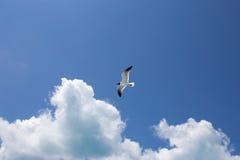 Ένα seagull στο υπόβαθρο μπλε ουρανού Στοκ εικόνες με δικαίωμα ελεύθερης χρήσης