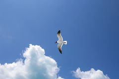 Ένα seagull στο υπόβαθρο μπλε ουρανού Στοκ Εικόνα