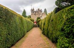 Ένα walkpath μέσω των κήπων σε Crathes Castle με τους πράσινους φράκτες και στις δύο πλευρές στοκ εικόνες