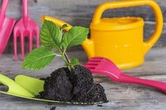 Έννοια άνοιξη κηπουρικής Στοκ εικόνα με δικαίωμα ελεύθερης χρήσης