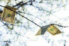 Έννοια δέντρων χρημάτων Εικόνα των δολαρίων στον κλάδο Στοκ Φωτογραφία