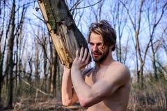Έννοια ανδροπρέπειας Ο βάναυσος ισχυρός ελκυστικός τύπος ατόμων που συλλέγει το ξύλο στο δασικό βάναυσο προκλητικό υλοτόμο ατόμων στοκ φωτογραφία με δικαίωμα ελεύθερης χρήσης