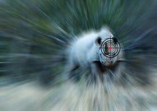 Έννοια αντι-λαθραίου κυνηγιού ρινοκέρων Στοκ φωτογραφίες με δικαίωμα ελεύθερης χρήσης
