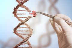 Έννοια γενετικής εφαρμοσμένης μηχανικής και χειρισμού γονιδίων Το χέρι αντικαθιστά μέρος ενός μορίου DNA Στοκ φωτογραφία με δικαίωμα ελεύθερης χρήσης