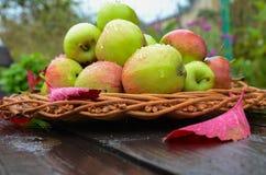 Έννοια για τα εποχιακά φρούτα, τη συγκομιδή φθινοπώρου, την οργανική καλλιέργεια και τη γεωργία Στοκ Εικόνες