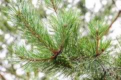 Έννοια για το χρόνο Χριστουγέννων Στοκ Φωτογραφίες