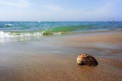 Έννοια διακοπών θερινής θάλασσας, κοχύλι θάλασσας στη sanly παραλία Στοκ φωτογραφίες με δικαίωμα ελεύθερης χρήσης