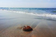 Έννοια διακοπών θερινής θάλασσας, κοχύλι θάλασσας στη sanly παραλία Στοκ Εικόνα