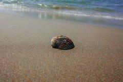 Έννοια διακοπών θερινής θάλασσας, κοχύλι θάλασσας στη sanly παραλία Στοκ Εικόνες