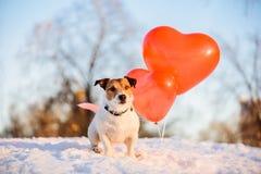 Έννοια διακοπών με τα μπαλόνια σκυλιών και αέρα για την ημέρα, τα γενέθλια ή την επέτειο βαλεντίνων Στοκ φωτογραφίες με δικαίωμα ελεύθερης χρήσης