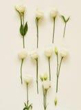 Έννοια διακοπών τα λουλούδια εμβλημάτων ανασκόπησης διαμορφώνουν λίγη ρόδινη σπείρα Στοκ φωτογραφία με δικαίωμα ελεύθερης χρήσης