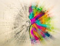 Έννοια εγκεφάλου doodle για τη δημιουργική δεξιά πλευρά και τη λογική αριστερή πλευρά απεικόνιση αποθεμάτων