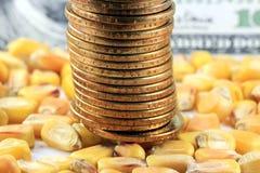 Έννοια εμπορικών συναλλαγών προϊόντων - χρυσό αμερικανικό νόμισμα νομισμάτων με το κίτρινο καλαμπόκι στοκ εικόνα με δικαίωμα ελεύθερης χρήσης