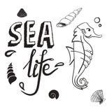 Έννοια ζωής θάλασσας Seahorse με τη συρμένη χέρι διανυσματική απεικόνιση κοχυλιών Στοκ Φωτογραφίες