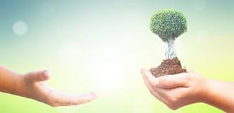 Έννοια ημέρας παγκόσμιου περιβάλλοντος: Ανθρώπινα χέρια που κρατούν το μεγάλο δέντρο πέρα από το πράσινο δασικό υπόβαθρο στοκ εικόνα