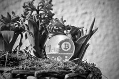 Έννοια λουλουδιών νομισμάτων Bitcoin Στοκ φωτογραφία με δικαίωμα ελεύθερης χρήσης