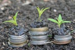 Έννοια οικονομικής ανάπτυξης με τα νομίσματα και τις εγκαταστάσεις στοκ εικόνα