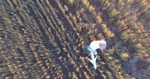 έννοια παιδικής ηλικίας ε Άποψη Copter του χαριτωμένου ξανθού τρεξίματος αγοριών μέσω ενός σπαρμένου τομέα με ένα αεροπλάν απόθεμα βίντεο
