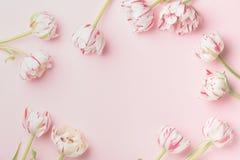 Έννοια πρωινού άνοιξη Επίπεδος-βάλτε των λουλουδιών πέρα από το ανοικτό ροζ υπόβαθρο, τοπ άποψη με το διάστημα για το κείμενό σας στοκ εικόνες
