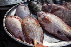 Έννοια στάβλων αγοράς λυθρινιών ψαριών Στοκ φωτογραφία με δικαίωμα ελεύθερης χρήσης