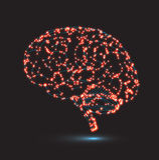 Έννοια της ανθρώπινης νοημοσύνης με τον ανθρώπινο εγκέφαλο Στοκ Φωτογραφία