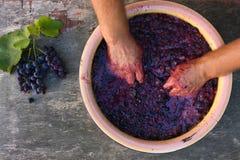 Έννοια της κατασκευής του σπιτικού κρασιού στοκ φωτογραφία