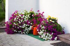 έννοια της κηπουρικής και του χόμπι Στοκ εικόνα με δικαίωμα ελεύθερης χρήσης