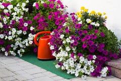 έννοια της κηπουρικής και του χόμπι Στοκ Φωτογραφίες
