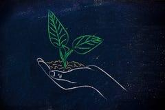 Έννοια της πράσινης οικονομίας, χέρια που κρατά τις νέες εγκαταστάσεις Στοκ φωτογραφία με δικαίωμα ελεύθερης χρήσης