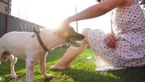 Έννοια της φιλίας και των κατοικίδιων ζώων Ευτυχή νέα γυναίκα και σκυλί που έχουν τη διασκέδαση στη χλόη απόθεμα βίντεο