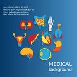 Έννοια του ιατρικού υποβάθρου Ανθρώπινη ανατομία Στοκ φωτογραφίες με δικαίωμα ελεύθερης χρήσης