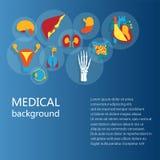 Έννοια του ιατρικού υποβάθρου Ανθρώπινη ανατομία Στοκ εικόνες με δικαίωμα ελεύθερης χρήσης